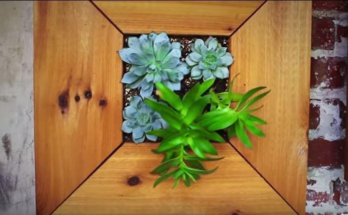 framedplants2