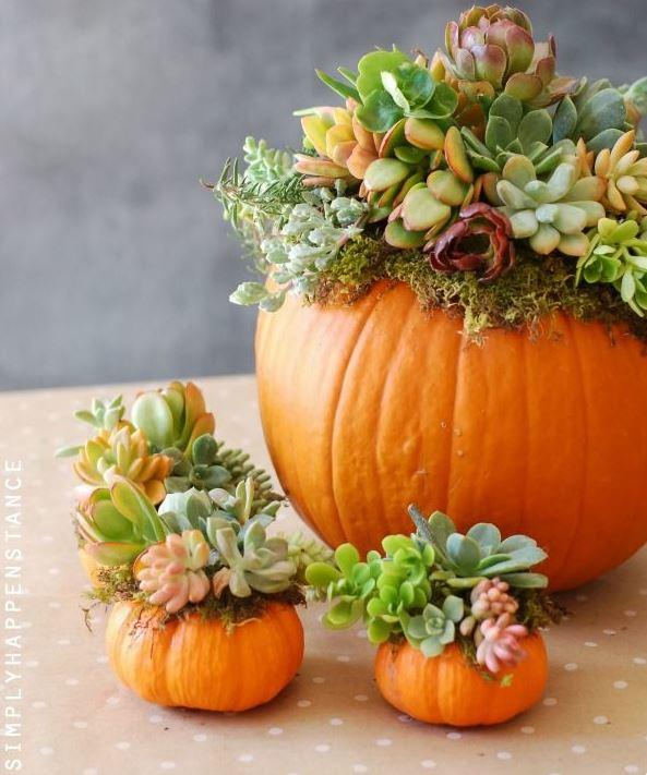Diy Pumpkin Succulent Garden Tutorial