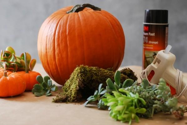 diy succulent pumpkin garden