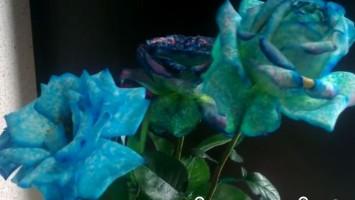 diy flower color change