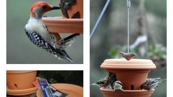 diy clay pot bird feeder
