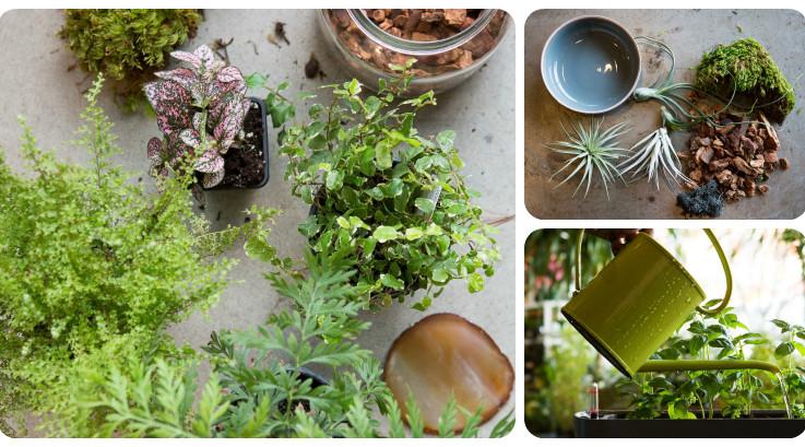 DIY indoor gardens